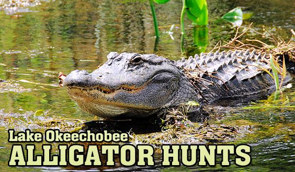 hunt-gator-slide